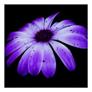 Blaue Blüte Perfektes Poster