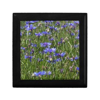 Blaue Cornflowers auf einem Gebiet Schmuckschachtel