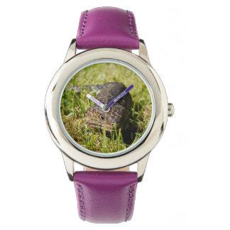 Blaue einschleichende Zunge-Eidechse das Gras, Armbanduhr
