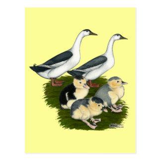 Blaue Elster-Enten-Familie Postkarte