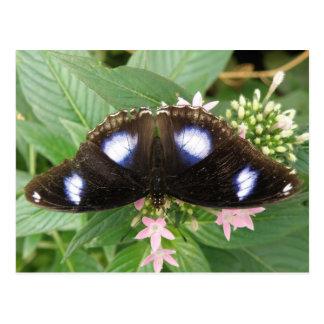 Blaue gepunktete Schmetterlings-Postkarte Postkarten
