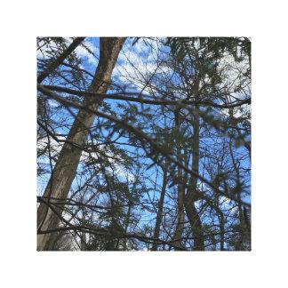 Blaue Himmel und grüne Wälder Leinwanddruck