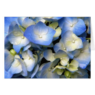Blaue Hydrangea-Frühlings-Blumen Central Park NYC Karte