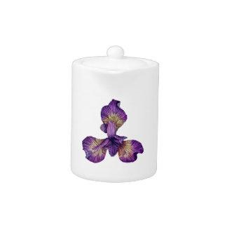 Blaue Iris Siberica Blume