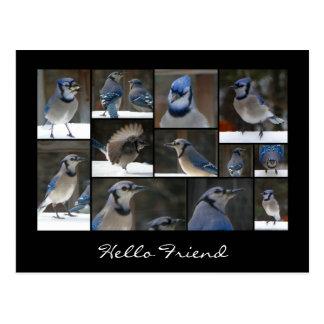 Blaue Jay-Collagen-Postkarte Postkarte