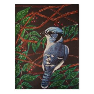 Blaue Jay Sammlung Postkarten