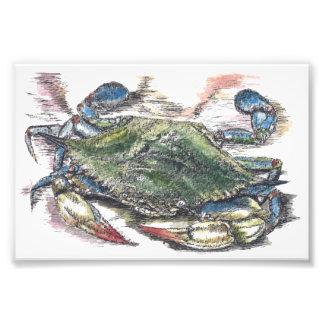 Blaue Krabben-Kunst-Foto-Druck Fotodruck