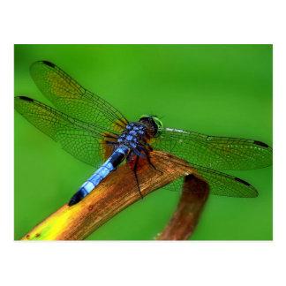 Blaue Libelle Postkarte