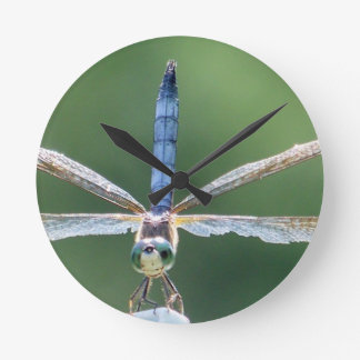 Blaue Libelle Runde Wanduhr