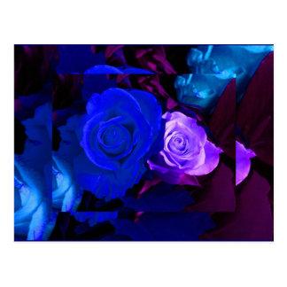 Blaue lila Rose Postkarten