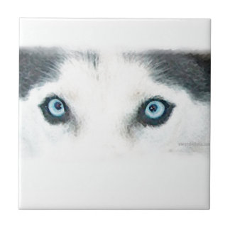 Blaue mit Augen Hunde können den Wind sehen Fliese
