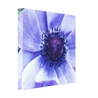 Blaue Mohnblumen-Blume, Leinwanddruck