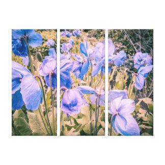 Blaue Mohnblumen, Himalajamohnblumen, drei Leinwanddruck