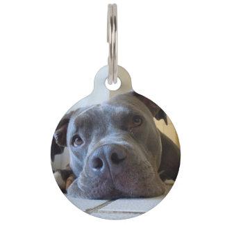 Blaue Nasen-Pitbull-Erkennungsmarke Haustiermarke