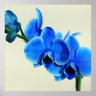 Blaue Orchidee Poster