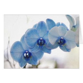 Blaue Orchideen Grußkarte