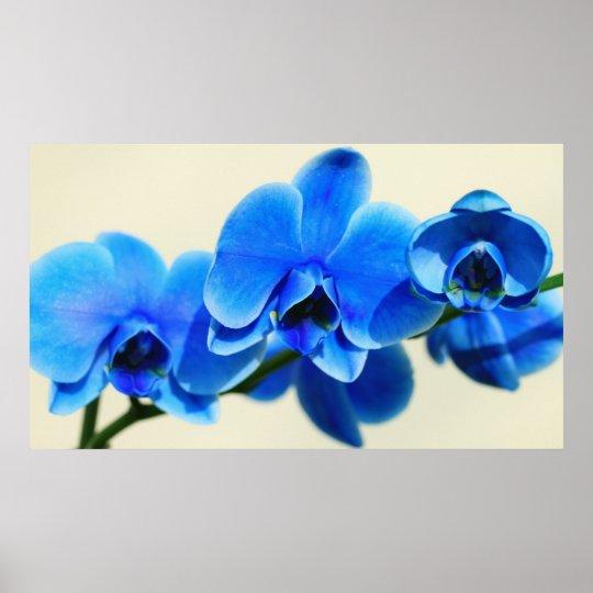 Blaue Orchideen Poster