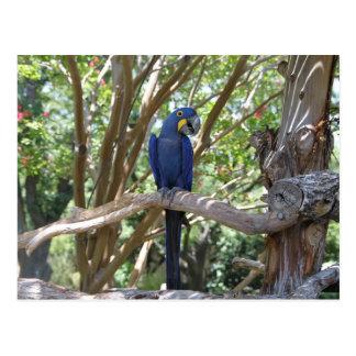 Blaue Papageienpostkarte Postkarte