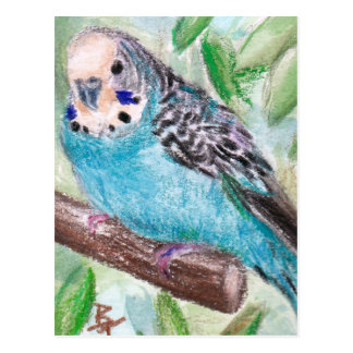 Blaue Parakeet-Postkarte Postkarten