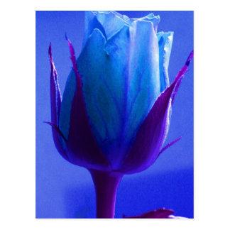 Blaue Rosen-Freuden-Postkarte - kundengerecht