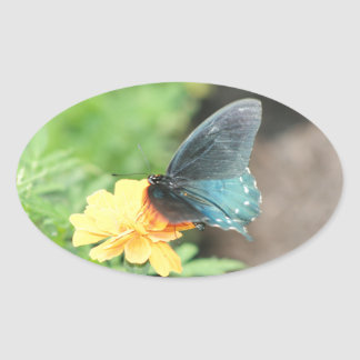 Blaue Schmetterlings-Gelbcoreopsis-Sommer-Produkte Ovaler Aufkleber