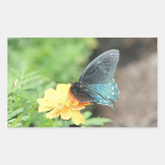 Blaue Schmetterlings-Gelbcoreopsis-Sommer-Produkte Rechteckiger Aufkleber