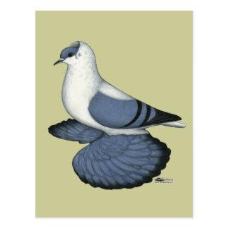 Blaue Schwalben-Taube Postkarten