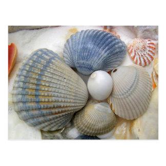 Blaue Seashell-Fotografie-Postkarten