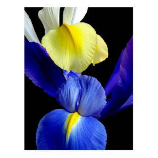 Blaue u. gelbe Iris-Blumen 4b Postkarte