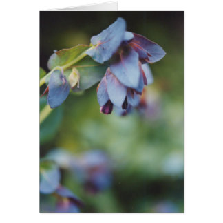 Blaue u. violette mehrjährige Pflanze Karte