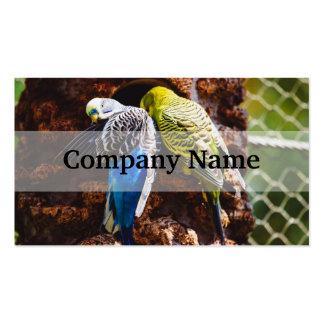 Blaue und grüne Parakeets, Vogel-Fotografie Visitenkarten Vorlage