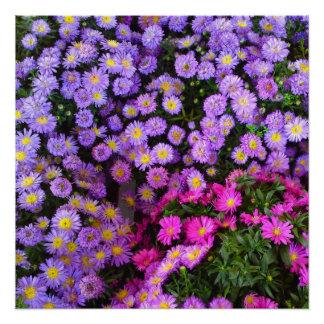 Blaue und lila Mama-Blumen-perfektes Plakat Poster
