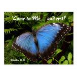 Blauer exotischer Schmetterling Postkarten