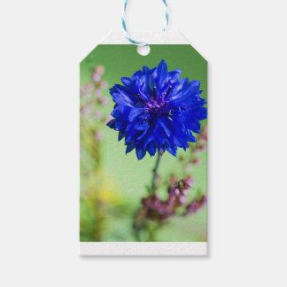 Blauer frischer Cornflower auf Grün unscharfem Geschenkanhänger