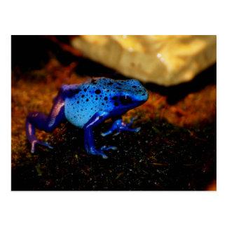 Blauer Gift-Frosch Postkarten