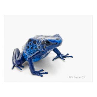Blauer Gift-Pfeil-Frosch (Dendrobates Tinctorius) Postkarte