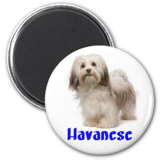 Blauer Havanese TAN und weißes Hündchen Runder Magnet 5,7 Cm