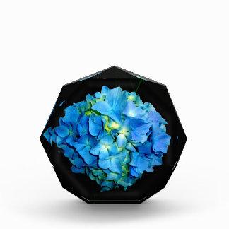 Blauer Hydrangea Auszeichnung