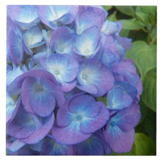 Blauer Hydrangea blüht mit Blumen Fliese