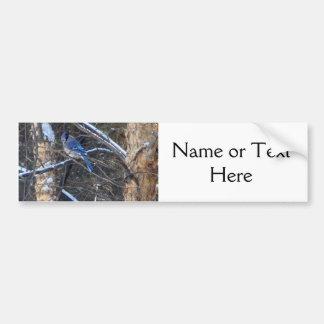 Blauer Jay-Vogel in den Winter-Bäumen Autoaufkleber