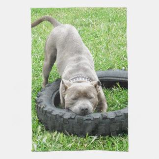Blauer junger Staffordshire-Bullterrier, Handtuch