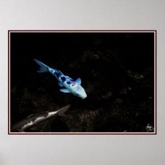Blauer Karpfen Poster