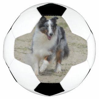 Blauer Merle Australier-Schäfer Fußball
