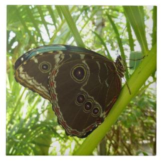 Blauer Morpho Schmetterlings-tropische Keramikfliese