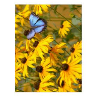 Blauer Schmetterling auf gelben Blumen Postkarte