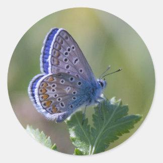 blauer Schmetterling Stickers