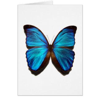 Blauer Schmetterling Karte