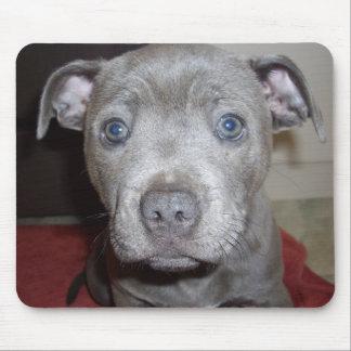 Blauer Staffordshire-Bullterrier-Welpe, Mousepad
