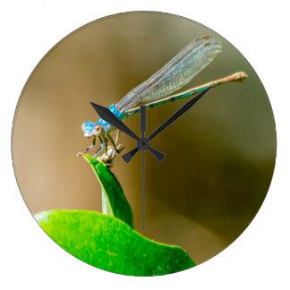 Blauer TexasDamselfly, der auf einem Blatt Große Wanduhr