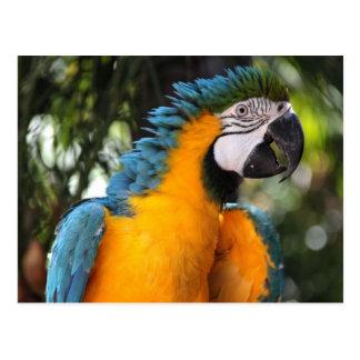 Blauer und gelber Macaw Postkarte